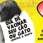 Vacinação contra raiva em cães e gatos