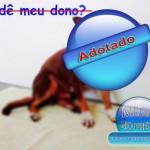 Animais Achados e Perdido em Rio Preto