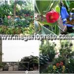Floricultura Paisagismo Decoração