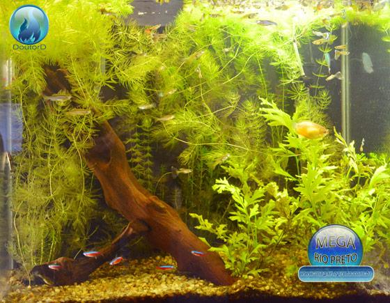 Como montar um aquário de peixes e plantas sem gastar muito